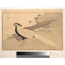 Keisai: Bai xian - メトロポリタン美術館