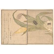 Kitagawa Utamaro: Plate VIII - Metropolitan Museum of Art