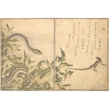 喜多川歌麿: Skink and Snake (Tokage and Hebi), from Picture Book of Selected Insects with Crazy Poems (Ehon Mushi Erabi) - メトロポリタン美術館