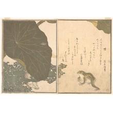 喜多川歌麿: Gold Beetle and Frogs (Koganemushi and Kaeru), from Picture Book of Selected Insects with Crazy Poems (Ehon Mushi Erabi) - メトロポリタン美術館