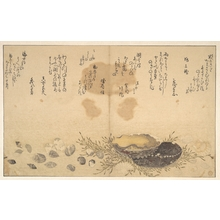 Kitagawa Utamaro: Shells Under Water - Metropolitan Museum of Art