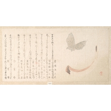Kubo Shunman: Flower-Vase of Horn and a Butterfly - Metropolitan Museum of Art