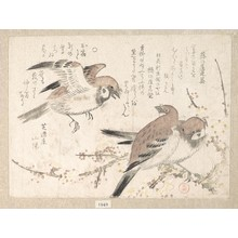 Kubo Shunman: Sparrows and Plum Blossoms - Metropolitan Museum of Art