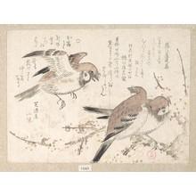 窪俊満: Sparrows and Plum Blossoms - メトロポリタン美術館