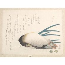 柳々居辰斎: Duck and Onion - メトロポリタン美術館