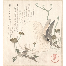 Kubo Shunman: Hare and Dandelion? - Metropolitan Museum of Art
