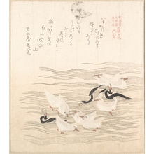 Kubo Shunman: Sea-Gulls Playing on the Water - Metropolitan Museum of Art
