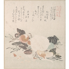 Kubo Shunman: Various Shells with Sea Weeds - Metropolitan Museum of Art