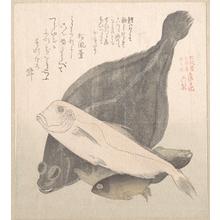 窪俊満: Flounder and Other Fishes - メトロポリタン美術館
