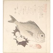 Kubo Shunman: Tai Fish and Top-Shells - Metropolitan Museum of Art