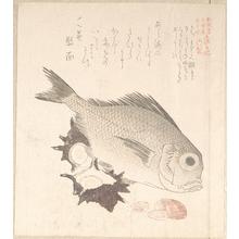 窪俊満: Tai Fish and Top-Shells - メトロポリタン美術館