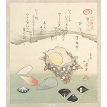 Totoya Hokkei: Top-Shell and Various Shells - Metropolitan Museum of Art