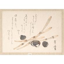 Uematsu Tôshû: Tsukushi Plant and Shijimi Shells - メトロポリタン美術館