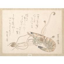 Uematsu Tôshû: Shrimp and Udo Plant - Metropolitan Museum of Art