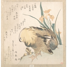 Kubo Shunman: Pair of Mandarin Ducks and Iris Flowers - Metropolitan Museum of Art