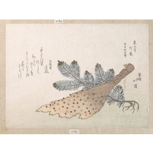 Totoya Hokkei: Young Pine Tree and Jeweled Broom - Metropolitan Museum of Art