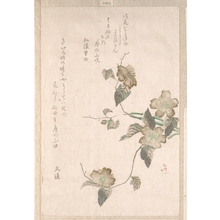 Unknown: Yamabuki Flowers (kerria japonica) - Metropolitan Museum of Art