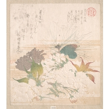 Kubo Shunman: Cherry Blossoms and Pine Cones - Metropolitan Museum of Art