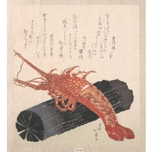 Totoya Hokkei: Lobster on a Piece of Charcoal - Metropolitan Museum of Art