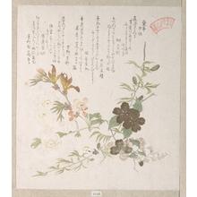 Kubo Shunman: Cherry Blossoms and Yamabuki Flowers - Metropolitan Museum of Art