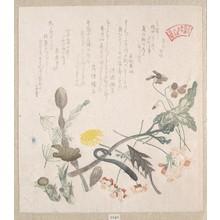 窪俊満: Violets, Primroses and Other Spring Flowers - メトロポリタン美術館