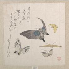 窪俊満: Butterflies - メトロポリタン美術館