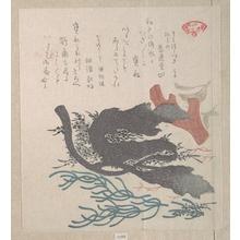 Kubo Shunman: Various Seaweed - Metropolitan Museum of Art