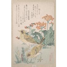 Kubo Shunman: Skylarks and Primroses - Metropolitan Museum of Art