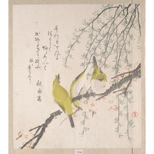 Kubo Shunman: Branches of Plum Tree and Willow with Japanese White-Eyes - Metropolitan Museum of Art