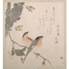 Kubo Shunman: Bullfinches and Cherry Blossoms - Metropolitan Museum of Art
