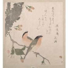 窪俊満: Bullfinches and Cherry Blossoms - メトロポリタン美術館