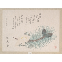Kubo Shunman: Pines and Cherry Blossoms - Metropolitan Museum of Art
