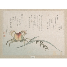 Katsushika Hokusai: Crab and Rice Plant - Metropolitan Museum of Art