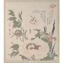 Kubo Shunman: Peonies and Iris - Metropolitan Museum of Art