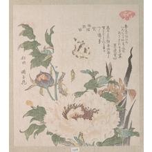窪俊満: Peonies and Iris - メトロポリタン美術館