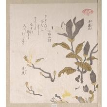 窪俊満: Magnolia Flowers - メトロポリタン美術館