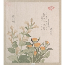 Kubo Shunman: The Common Marigold and The Rajoman Flowers - Metropolitan Museum of Art