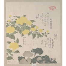 窪俊満: Corchorus (or Yellow Rose) and Creeping Saxifrage - メトロポリタン美術館