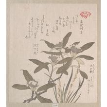 窪俊満: Daphne odora and Mojisuri-so - メトロポリタン美術館