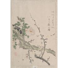 窪俊満: Roses and Plum Blossoms - メトロポリタン美術館