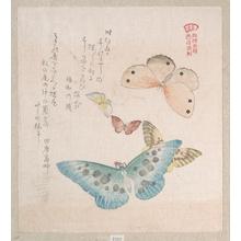 窪俊満: Various Moths and Butterflies - メトロポリタン美術館