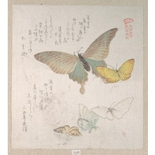 Kubo Shunman: Various Moths and Butterflies - Metropolitan Museum of Art