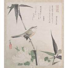 蹄斎北馬: Roses and Bamboo with Nightingale - メトロポリタン美術館