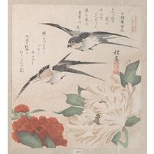 蹄斎北馬: Swallows and Peonies - メトロポリタン美術館