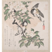 蹄斎北馬: Marsh-tits and Aronia Flowers - メトロポリタン美術館