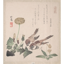 Teisai Hokuba: Sparrows and Dandelion - Metropolitan Museum of Art