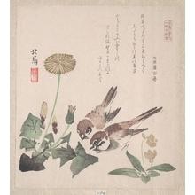 蹄斎北馬: Sparrows and Dandelion - メトロポリタン美術館