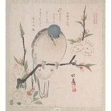 蹄斎北馬: Dove and Peach Flowers - メトロポリタン美術館