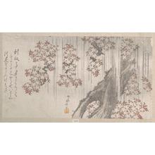 柳々居辰斎: Cherry Blossoms in the Rain - メトロポリタン美術館