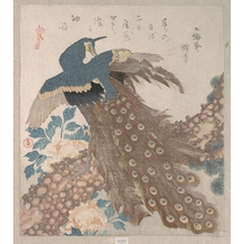 Totoya Hokkei: Peacock on the Pine Tree; Peonies - Metropolitan Museum of Art